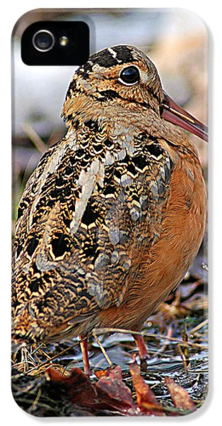 Timberdoodle The American Woodcock IPhone 5 / 5s Case by Timothy Flanigan