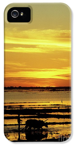 Sillouette iPhone 5 Cases - Tonle Sap Sunrise 02 iPhone 5 Case by Rick Piper Photography