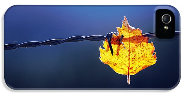 Leaf iPhone 5 Cases - Trapped Leaf On Barbed Wire iPhone 5 Case by Mikel Martinez de Osaba