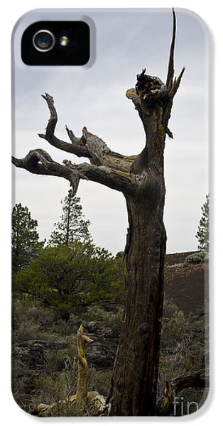 Conducting iPhone 5 Cases - Tree at Lava Trail iPhone 5 Case by David Gordon