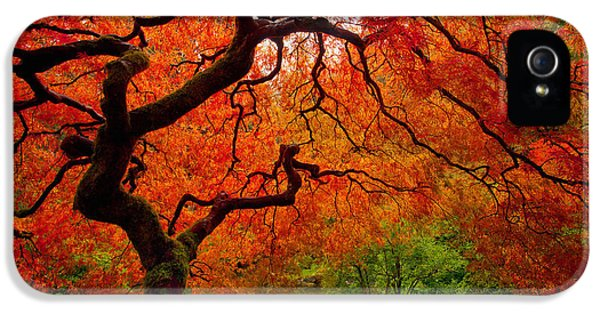 Plant iPhone 5 Cases - Tree Fire iPhone 5 Case by Darren  White