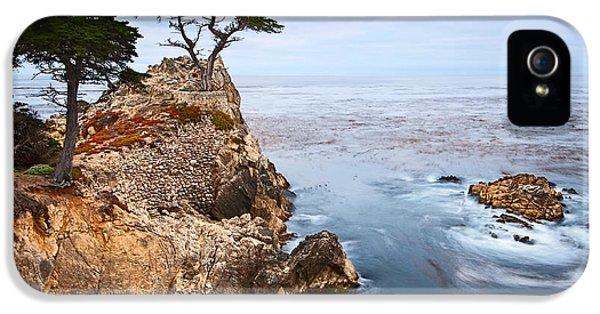 Tree Of Dreams - Lone Cypress Tree At Pebble Beach In Monterey California IPhone 5 / 5s Case by Jamie Pham