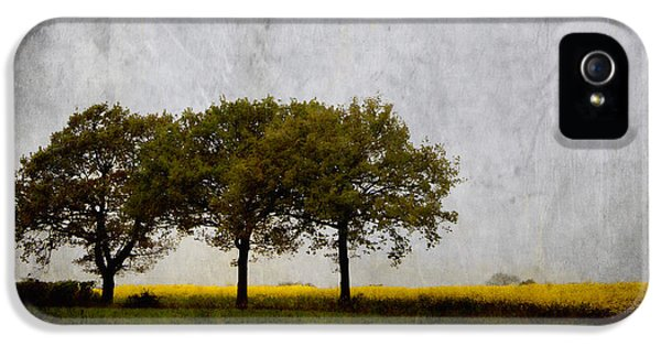 Trio iPhone 5 Cases - Trees at Sunrise iPhone 5 Case by Carol Leigh