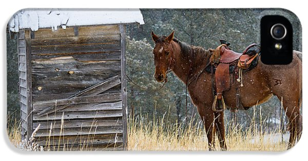 Wait iPhone 5 Cases - Trusty Horse  iPhone 5 Case by Inge Johnsson