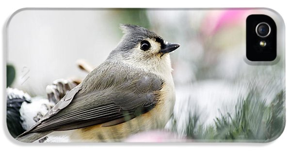 Tufted Titmouse Portrait IPhone 5 / 5s Case by Christina Rollo