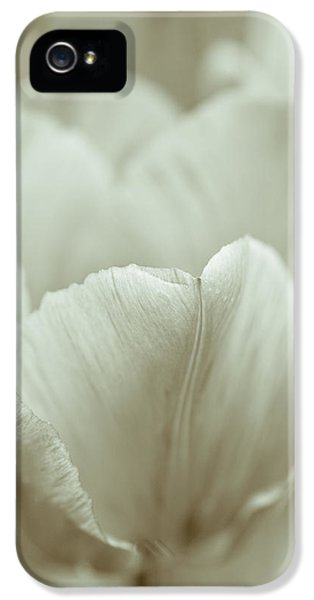 Artsy iPhone 5 Cases - Tulip iPhone 5 Case by Frank Tschakert