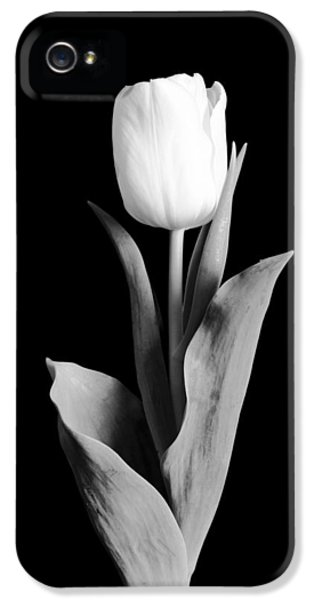 Tulips iPhone 5 Cases - Tulip iPhone 5 Case by Sebastian Musial