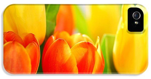 Extreme iPhone 5 Cases - Tulips iPhone 5 Case by Elena Elisseeva