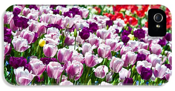 Blooming iPhone 5 Cases - Tulips Field iPhone 5 Case by Sebastian Musial