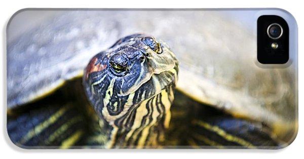 Turtle IPhone 5 / 5s Case by Elena Elisseeva
