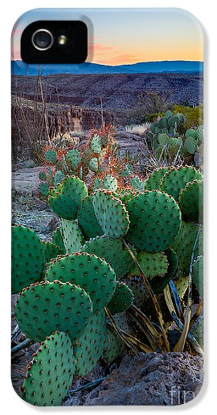 Epic iPhone 5 Cases - Twilight Prickly Pear iPhone 5 Case by Inge Johnsson