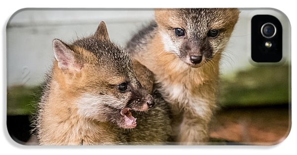 Young Foxes iPhone 5 Cases - Twin Fox Kits iPhone 5 Case by Paul Freidlund