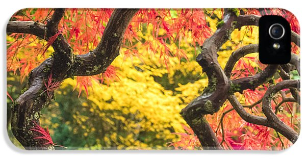 Chlorophyll iPhone 5 Cases - Twisted Maple iPhone 5 Case by Kyle Wasielewski