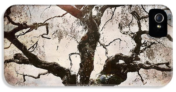 Old Tree iPhone 5 Cases - Twisted Tree I iPhone 5 Case by April Moen