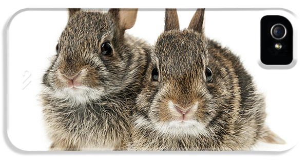 Young Rabbit iPhone 5 Cases - Two baby bunny rabbits iPhone 5 Case by Elena Elisseeva