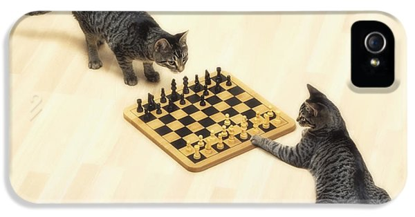 Chessboard iPhone 5 Cases - Two Grey Tabby Cats Playing iPhone 5 Case by Thomas Kitchin & Victoria Hurst