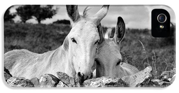Donkey iPhone 5 Cases - Two white Irish donkeys iPhone 5 Case by RicardMN Photography