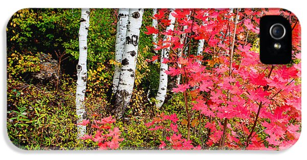 Foliage iPhone 5 Cases - Uinta Colors iPhone 5 Case by Chad Dutson