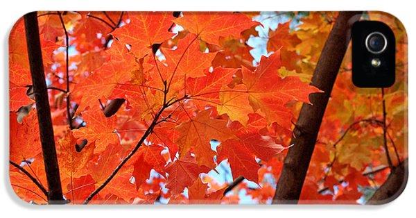 Boston iPhone 5 Cases - Under the Orange Maple Tree iPhone 5 Case by Rona Black