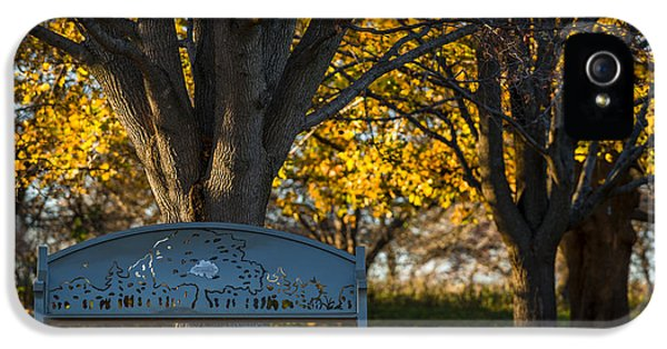 Foliage iPhone 5 Cases - Under The Tree iPhone 5 Case by Sebastian Musial