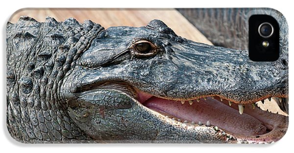 Usa, Florida Gatorland, Florida IPhone 5 / 5s Case by Michael Defreitas