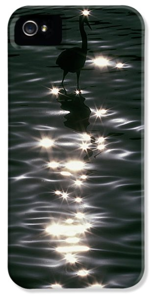 Usa, Florida, Placido IPhone 5 / 5s Case by Jaynes Gallery