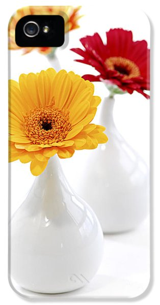 White Flowers iPhone 5 Cases - Vases with Gerbera flowers iPhone 5 Case by Elena Elisseeva