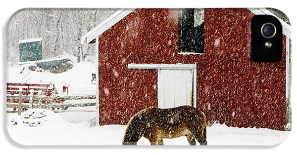 Livestock iPhone 5 Cases - Vermont Christmas Eve Snowstorm iPhone 5 Case by Edward Fielding