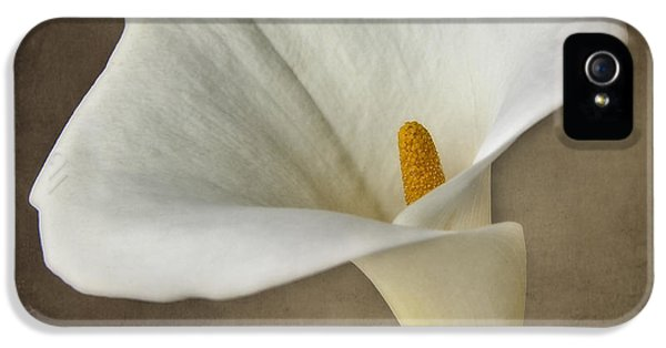 Tenderness iPhone 5 Cases - Vintage Calla palustris iPhone 5 Case by Erik Brede