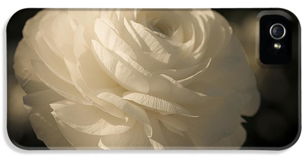 Ivory Flower iPhone 5 Cases - Vintage White  iPhone 5 Case by Ana V  Ramirez