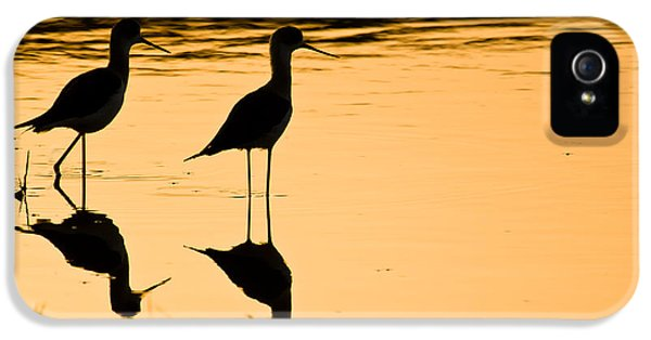 Sillouette iPhone 5 Cases - Wading Birds iPhone 5 Case by Nila Newsom