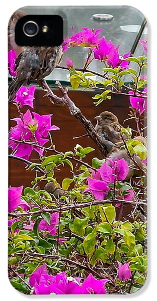 Passeridae iPhone 5 Cases - Waikiki Sparrows In Bougainvillea iPhone 5 Case by Michele Myers