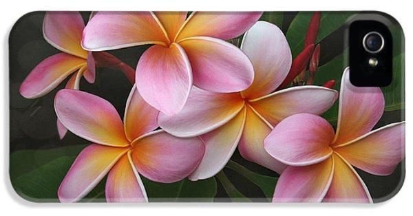 Plumerias iPhone 5 Cases - Wailua Sweet Love iPhone 5 Case by Sharon Mau