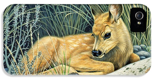 Waiting For Mom-mule Deer Fawn IPhone 5 / 5s Case by Paul Krapf