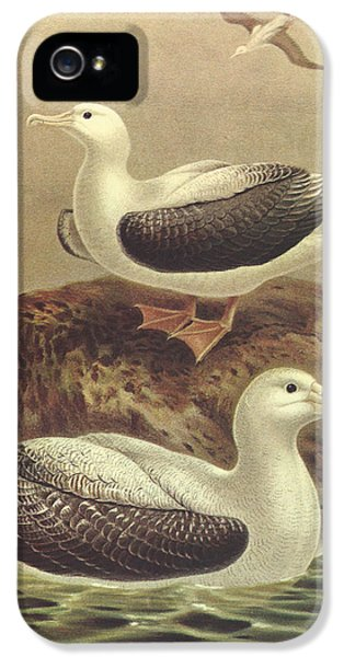 Wandering Albatross IPhone 5 / 5s Case by J G Keulemans