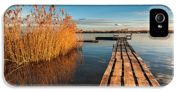 Cane iPhone 5 Cases - Warm winter afternoon iPhone 5 Case by Davorin Mance