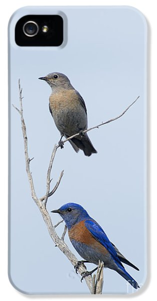 Western Bluebird Pair IPhone 5 / 5s Case by Mike  Dawson