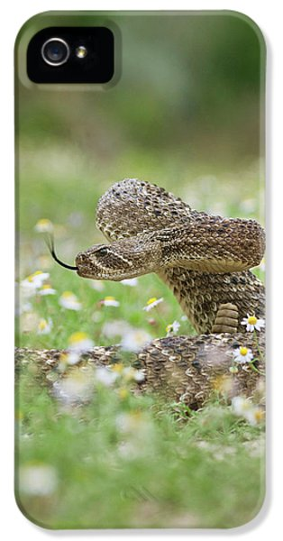 Western Diamondback Rattlesnake IPhone 5 / 5s Case by Larry Ditto