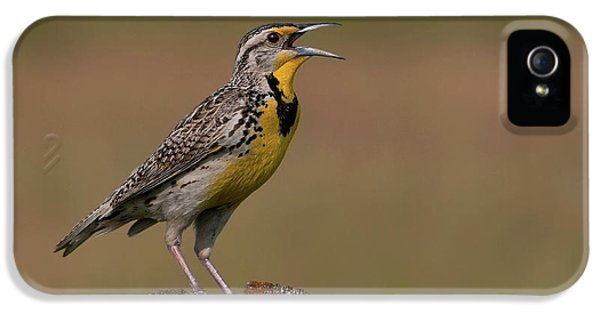 Western Meadowlark.. IPhone 5 / 5s Case by Nina Stavlund