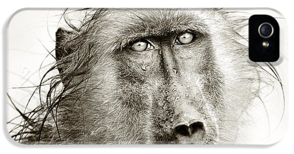Monochrome iPhone 5 Cases - Wet Baboon portrait iPhone 5 Case by Johan Swanepoel