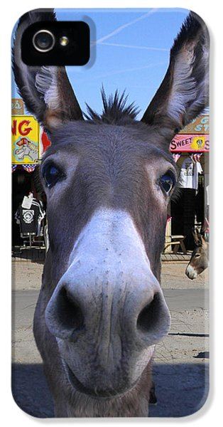 Donkey iPhone 5 Cases - What . . . No Carrots iPhone 5 Case by Mike McGlothlen