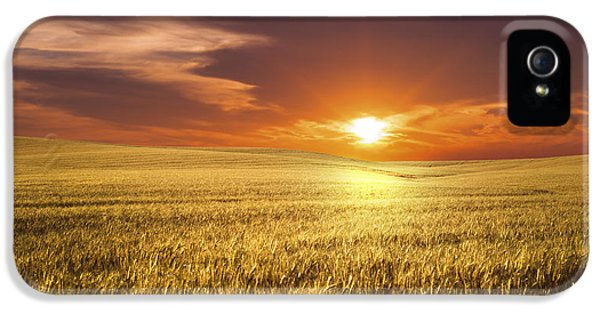 Agricultural iPhone 5 Cases - Wheat Field iPhone 5 Case by Aged Pixel