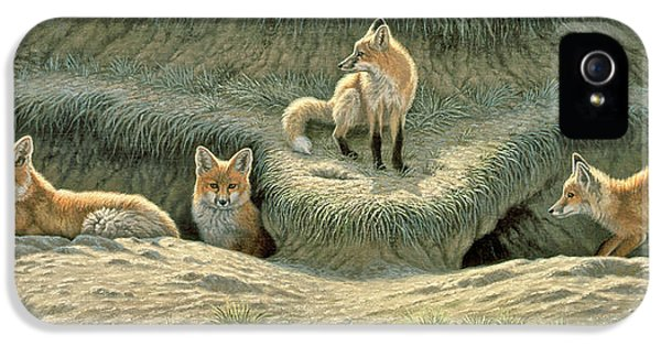 Red Fox iPhone 5 Cases - Wheres Mom-Fox Pups iPhone 5 Case by Paul Krapf