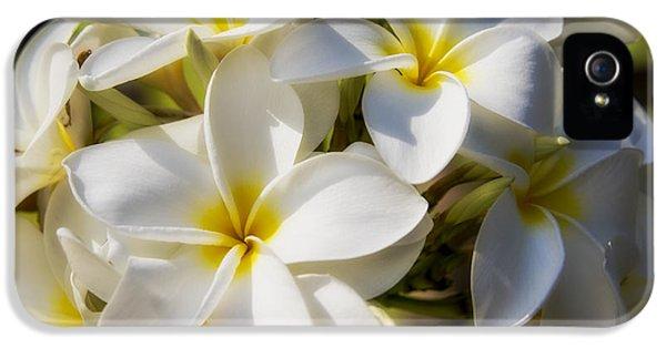 Yellow And White Plumeria Flower Frangipani iPhone 5 Cases - White and Yellow Plumeria 2 iPhone 5 Case by Brian Harig