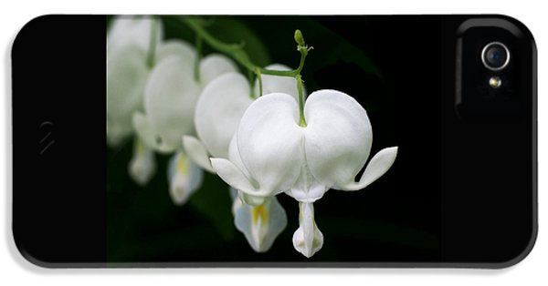 White Flowers iPhone 5 Cases - White Bleeding Hearts iPhone 5 Case by Rona Black