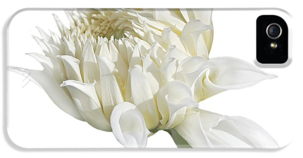 Ivory Flower iPhone 5 Cases - White Dahlia Flower in the Beginning iPhone 5 Case by Jennie Marie Schell