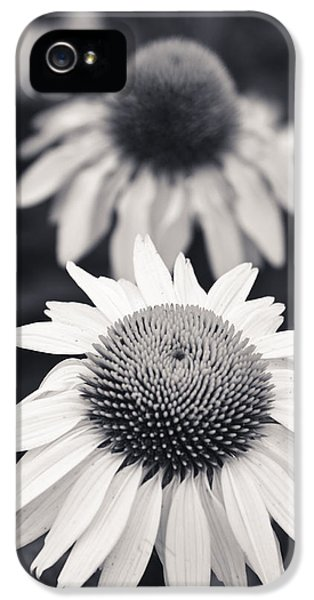 Echinacea iPhone 5 Cases - White Echinacea Flower or Coneflower iPhone 5 Case by Adam Romanowicz