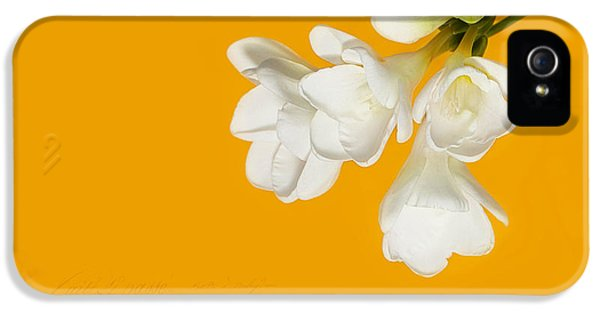 White Flowers On Tangerine Study IPhone 5 / 5s Case by Lisa Knechtel