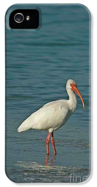 White Ibis IPhone 5 / 5s Case by Cindi Ressler