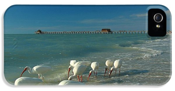 Feeding iPhone 5 Cases - White Ibis near Historic Naples Pier iPhone 5 Case by Juergen Roth